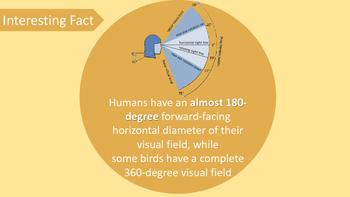 The Human Eye PowerPoint Presentation