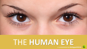 The Human Eye PowerPoint Presentation