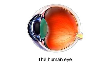 The Human Eye Powerpoint Slides