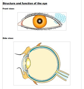 The Human Eye (Students' Notes)