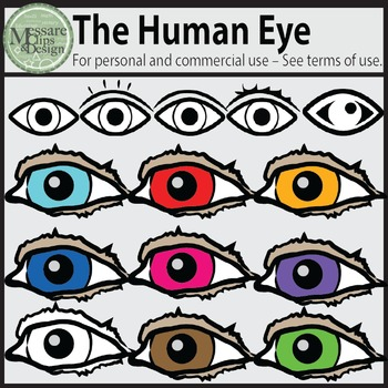 The Human Eye and Eye Icon Clip Art {Messare Clips and Design}
