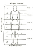 The Human Figure Proportion