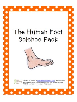 The Human Foot Science Pack