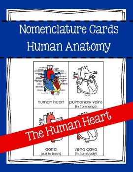 The Human Heart - Anatomy - Nomenclature Cards