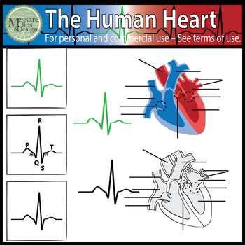 The Human Heart Clip Art {Messare Clips and Design}