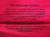 The Human Muscular System PowerPoint