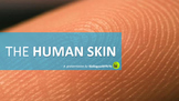 The Human Skin PowerPoint Presentation