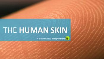 The Human Skin PowerPoint Presentation