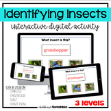 The Identifying Insects interactive digital activity