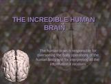 The Incredible Brain