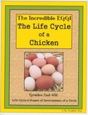 The Incredible Egg - The Life Cycle of a Chicken