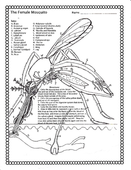The Mosquito Worksheet