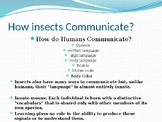 Insects- How InsectsCommunicate with each other and other insects?