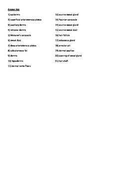 The Integumentary System Quiz or Worksheet