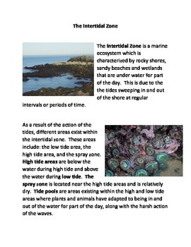 The Intertidal Zone