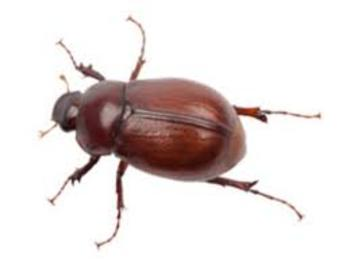The June Bug Song