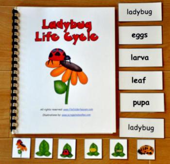 The Ladybug Life Cycle Adapted Book
