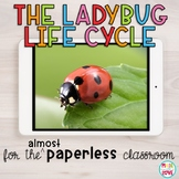The Ladybug Life Cycle for the (Almost) Paperless Classroom