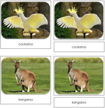 The Land Down Under Safari Toob Cards - Montessori