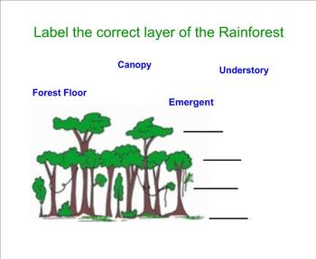 The Layers of the Rain Forest