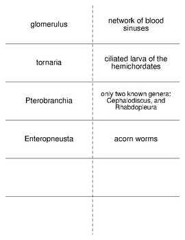 The Lesser Deuterostomes Vocabulary Flash Cards for Zoology