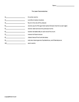 The Lesser Deuterostomes Vocabulary Quiz or Worksheet for Zoology