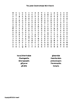 The Lesser Deuterostomes Vocabulary Word Search for Zoology