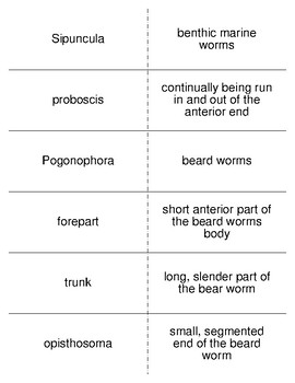 The Lesser Protostomes Vocabulary Flash Cards for Zoology