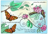 The Life Cycle Of A Monarch Butterfly