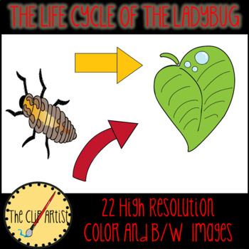 The Life Cycle of A Ladybug Clipart