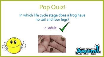 The Life Cycle of Frogs (Powerpoint)