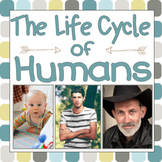 The Life Cycle of Humans