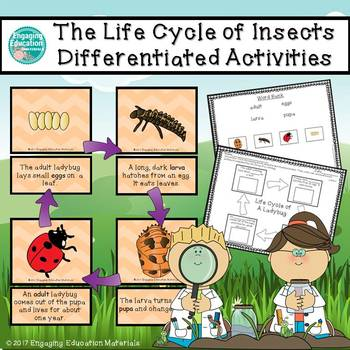The Life Cycle of Insects Differentiated Activities