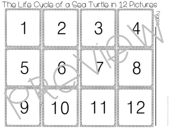 The Life Cycle of Sea Turtles Cut & Paste Worksheets