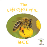 The Life Cycle of a Bee Package with Real Pictures / Photos