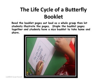Life Cycle of a Butterfly Interacitve Fun