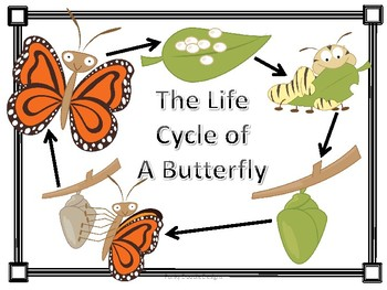 The Life Cycle of a Butterfly Pack