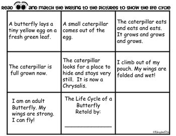 Butterfly Life Cycle Differentiated Activities & Crafts