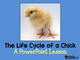 The Life Cycle of a Chick-A PowerPoint Lesson- Distance Learning