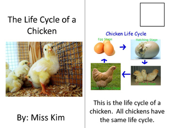 The Life Cycle of a Chick / Chicken Interactive Book