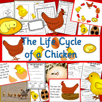 The Life Cycle of a Chicken- Spring, chick, egg, Easter