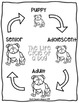 The Life Cycle of a Dog