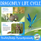 The Life Cycle of a Dragonfly PowerPoint Presentation (12 Slides)