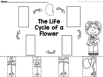 The Life Cycle of a Flower FREEBIE