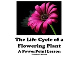 The Life Cycle of a Flowering Plant - PowerPoint