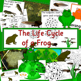 The Life Cycle of a Frog- Spring, tadpoles