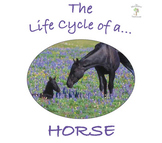 The Life Cycle of a Horse Package