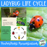 The Life Cycle of a Ladybug PowerPoint Presentation (15 slides)