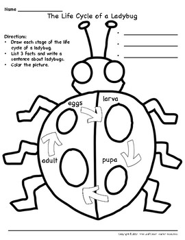 The Life Cycle of a Ladybug Writing Activity