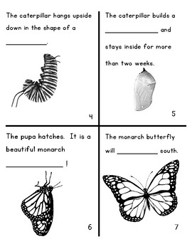 The Life Cycle of a Monarch Butterfly Mini Book